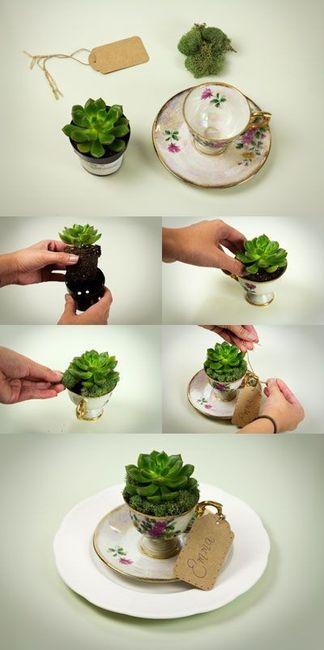 Inspi cactus 35