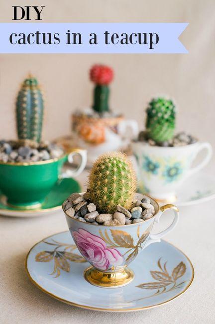 Inspi cactus 36