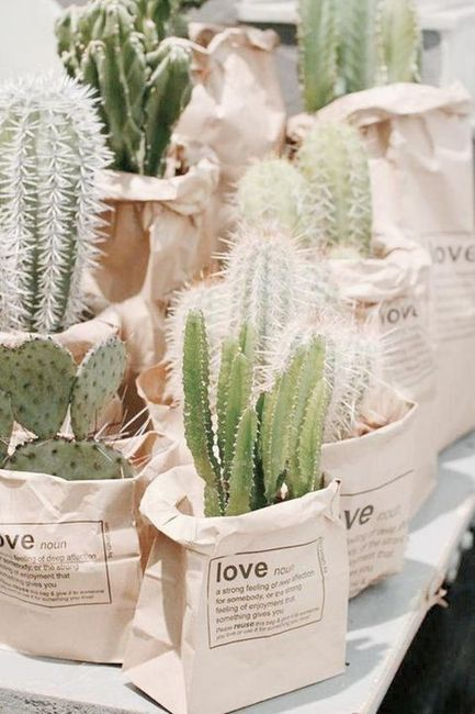 Inspi cactus 50