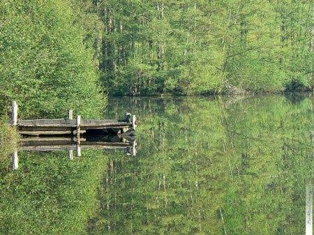 Forêt de Brocéliande: l'étang des forges
