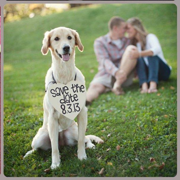 Feriez-vous annoncer votre mariage par votre chat ? 8