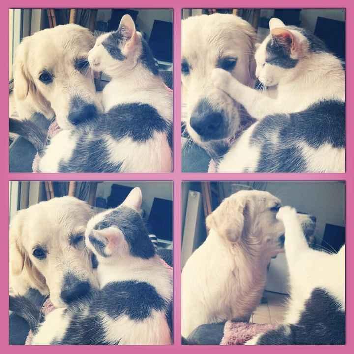 Nos amis les bêtes - 1