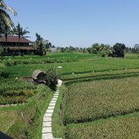 Notre lune de miel à Bali - 29