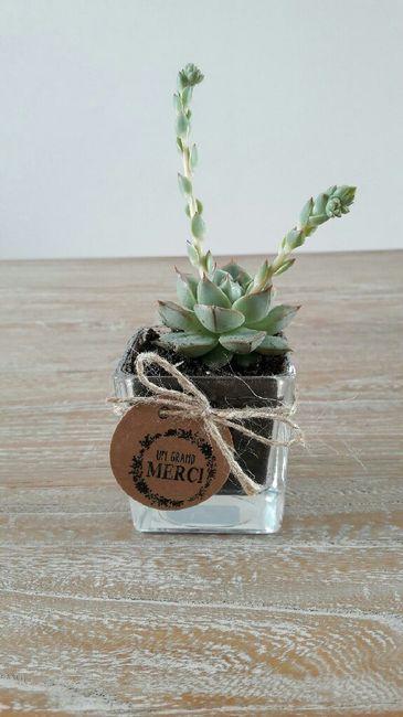 Cadeaux invités succulentes 1