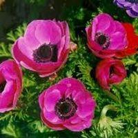 fleur manquante bouquet 2