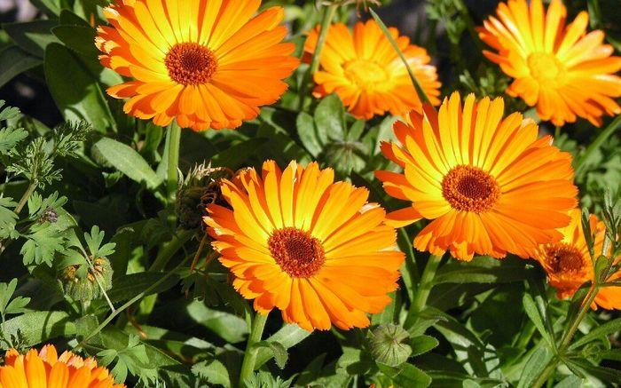 Les fleurs... - 2