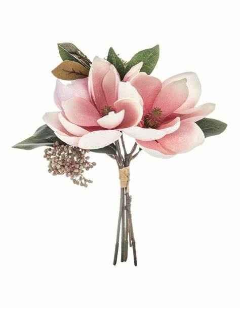 Du magnolia ... 2