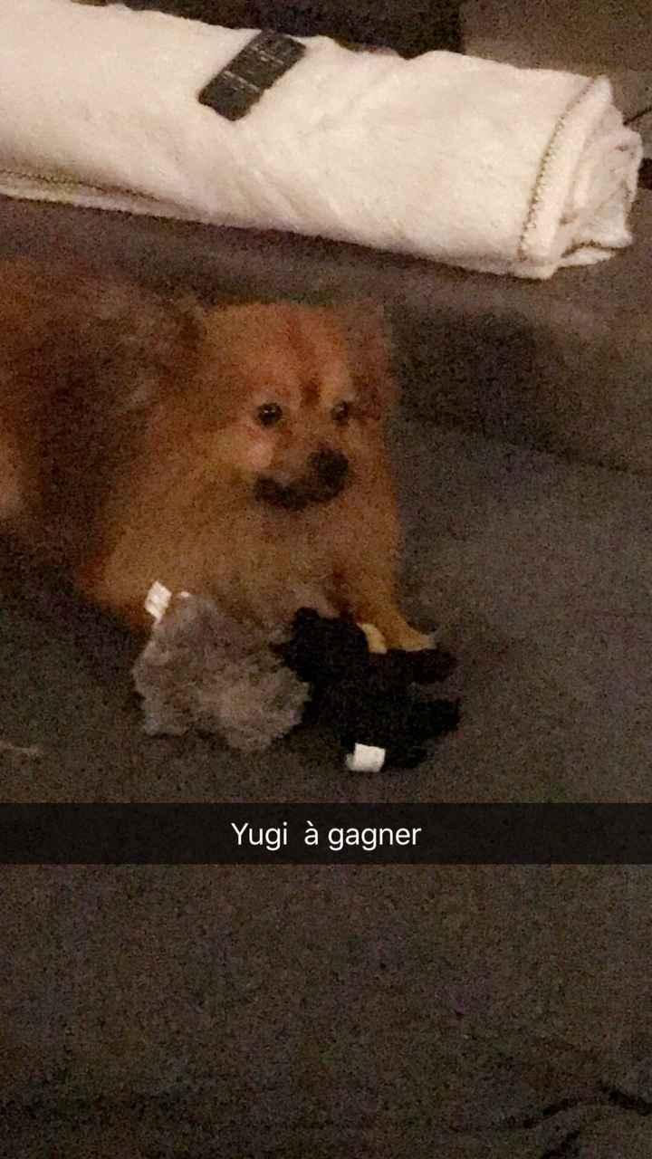 Implication de votre chien - 1