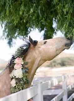 L'essentiel : Un magnifique cheval!