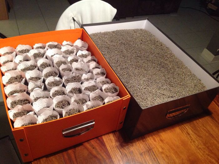 Cornets lavande