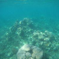 Plongée île aux bénitiers 2