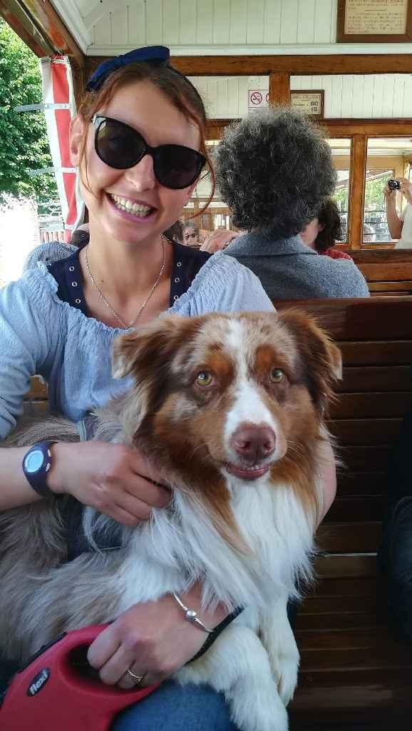 Mariage et chien 🐶 - 1