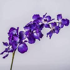 Le faire-part de l'orchidée 1