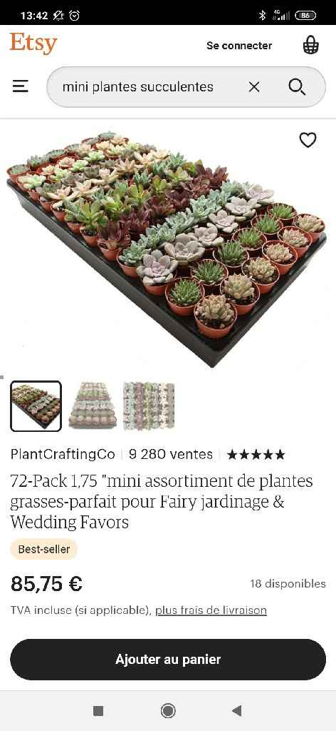 Cadeaux invités : mini plante - 1