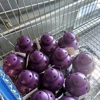 Lanternes violettes - 1