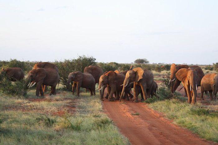 Voyage de noce au kenya - 1