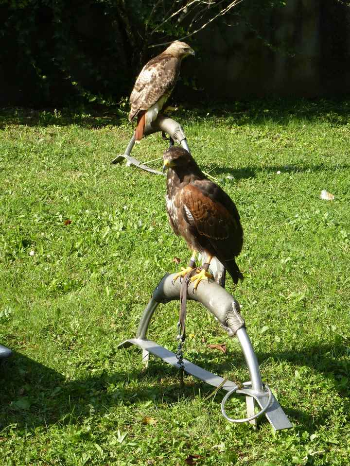 les oiseaux 2