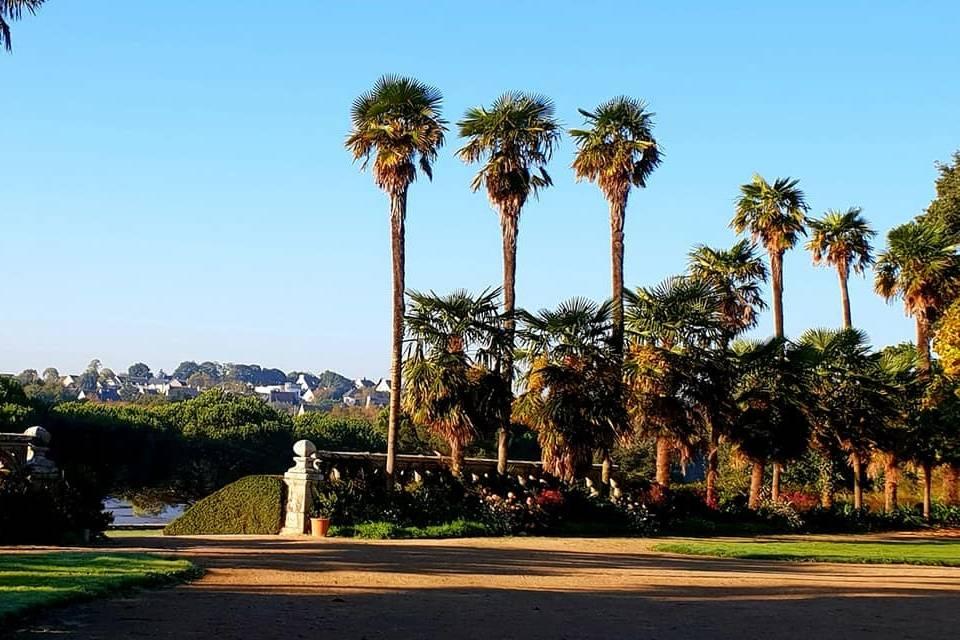 Les palmiers des jardins