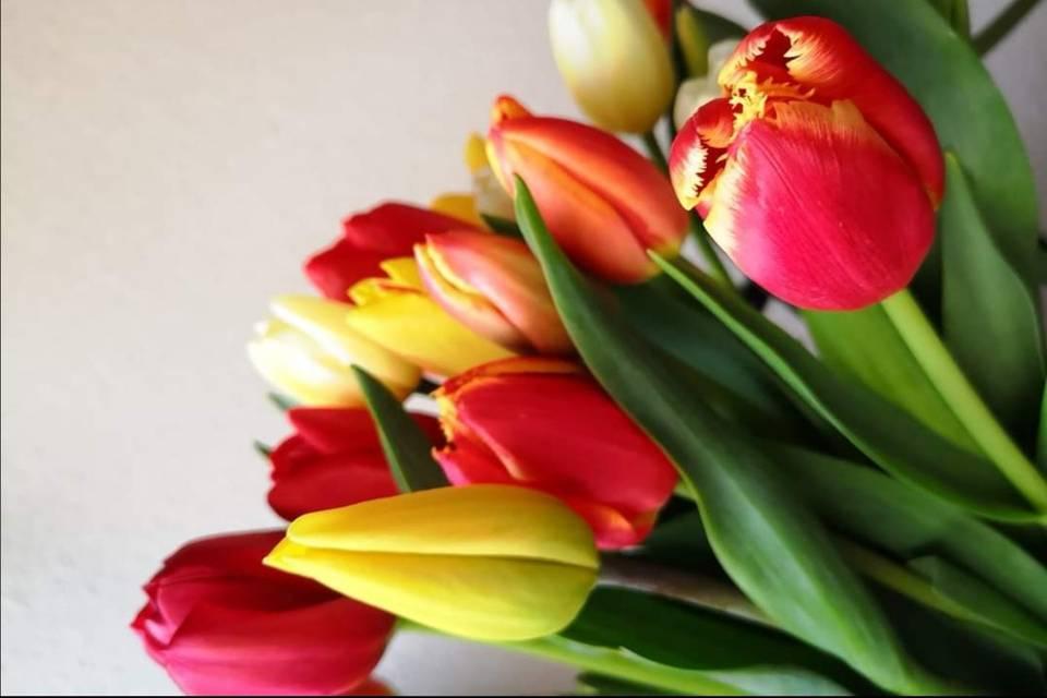 Fleurs du Boutonnet