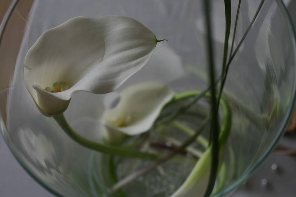 Nature et poésie
