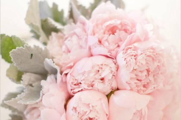 Une fleur est née