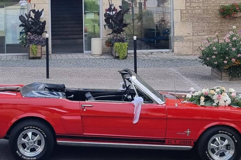 Mustang 11